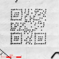 5X_objective_lens_5x5_stitching
