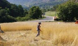 harvesting_field